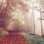 Der Weg vom bedeutsamen Leben